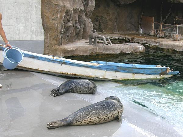 旭山動物園 アザラシの写真画像 その12