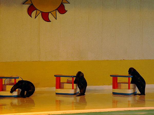 小樽水族館写真画像1 その3 オタリアのショー
