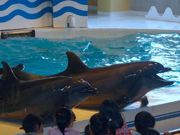 小樽水族館写真画像1 その6 バンドウイルカのショー