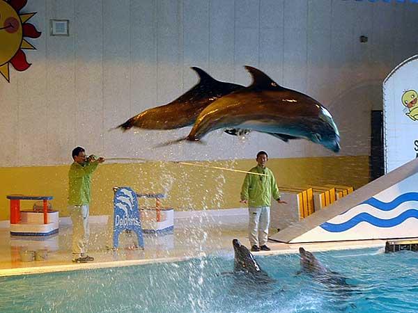 小樽水族館写真画像1 その7 バンドウイルカのショー
