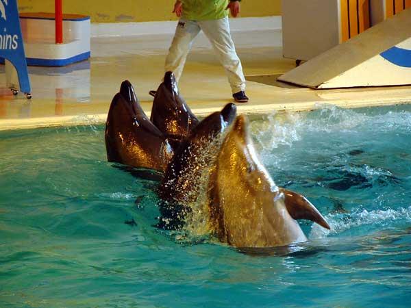小樽水族館写真画像1 その8 バンドウイルカのショー