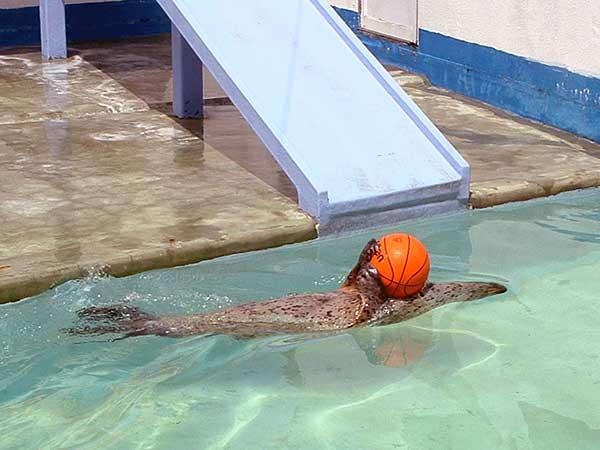 小樽水族館写真画像1 その13 アザラシのショー