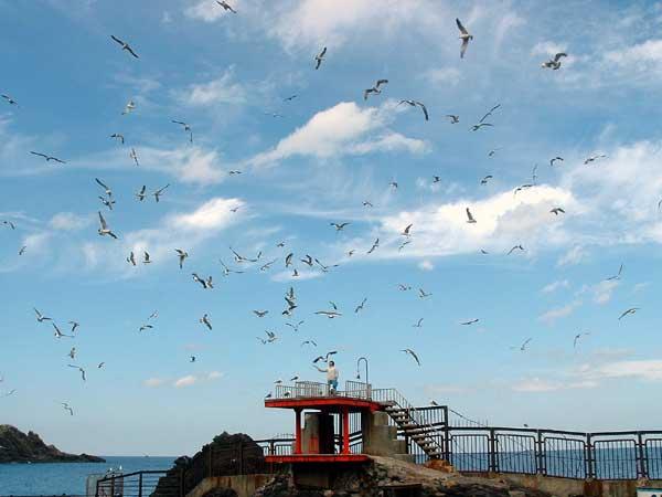 小樽水族館写真画像1 その16 カモメ