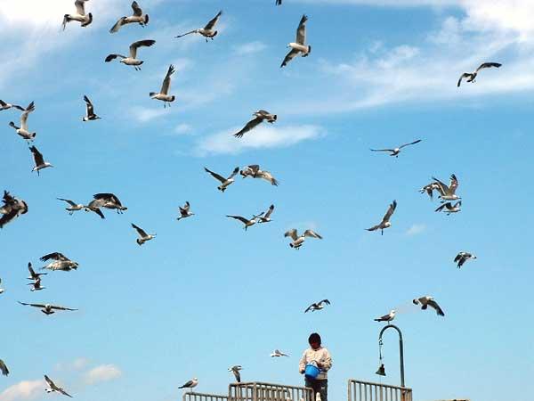 小樽水族館写真画像1 その17 カモメ