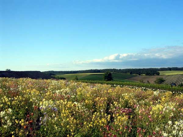 北海道風景写真画像 美瑛 四季彩の丘1