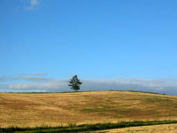 北海道風景写真画像 美瑛 メルヘンの丘2