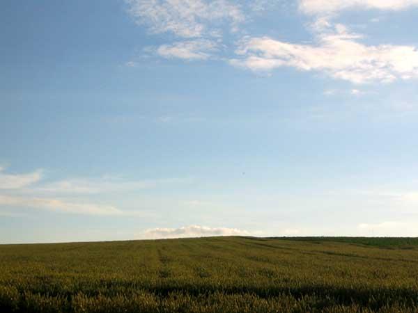 北海道風景写真画像 美瑛 広大な畑1