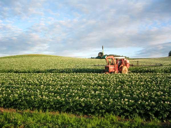 北海道風景写真画像 美瑛 ジャガイモ畑2