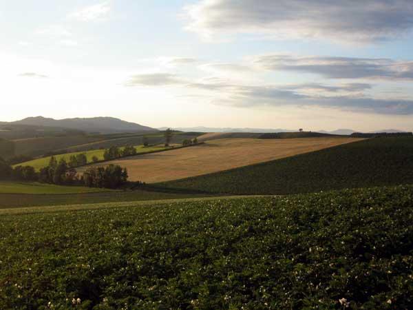 北海道風景写真画像 美瑛 パッチワークの丘